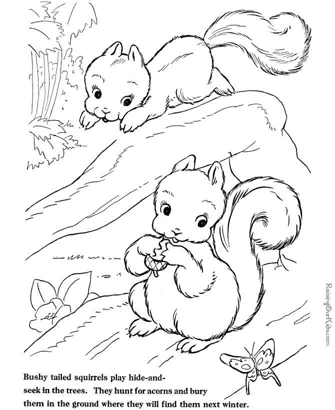 Bauernhof Tier Malseite - Eichhörnchen Ausmalblatt 3741
