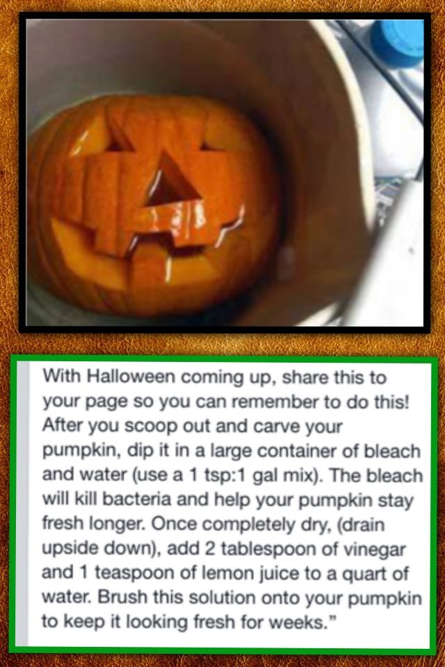 preserve your pumpkin do this plus rub petroleum jelly on all carved sides after soaking this. Black Bedroom Furniture Sets. Home Design Ideas