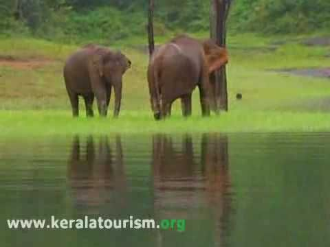 Thekkady Wildlife Destination, Idukki, Kerala, India