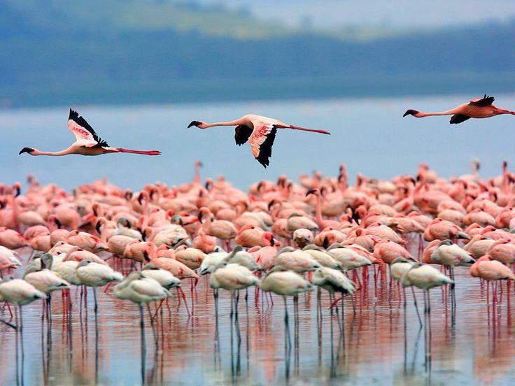 Diese Flamingos tragen schon die Trendfarbe dieses Winters :-) http://www.lastminute.de/reisen/suedafrika/?lmextid=a1618_180_e304002