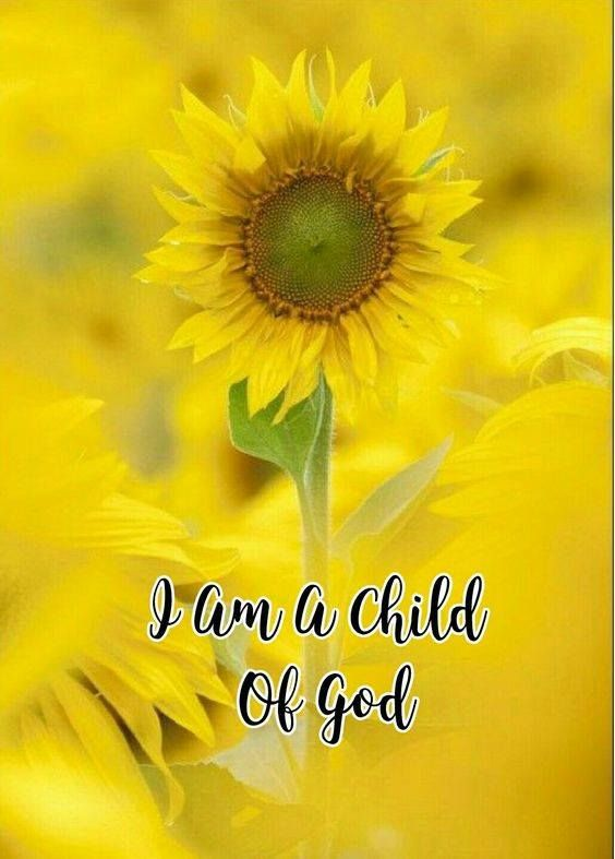 Image by MR Geller on Sunflowersssss***   Sunflower quotes ...