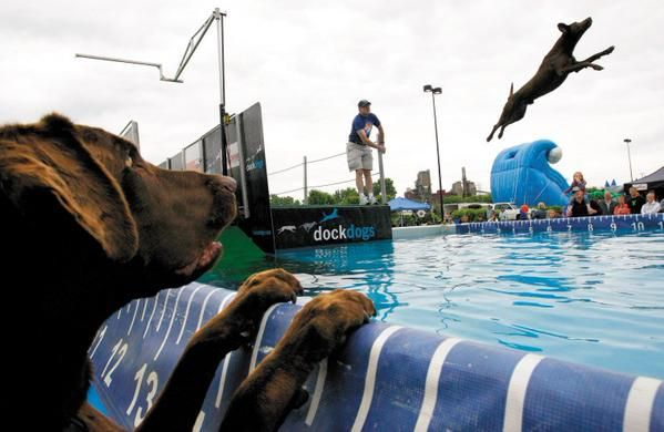 #TOwaterfront Dock Dogs this weekend June 19-21, 2015!!