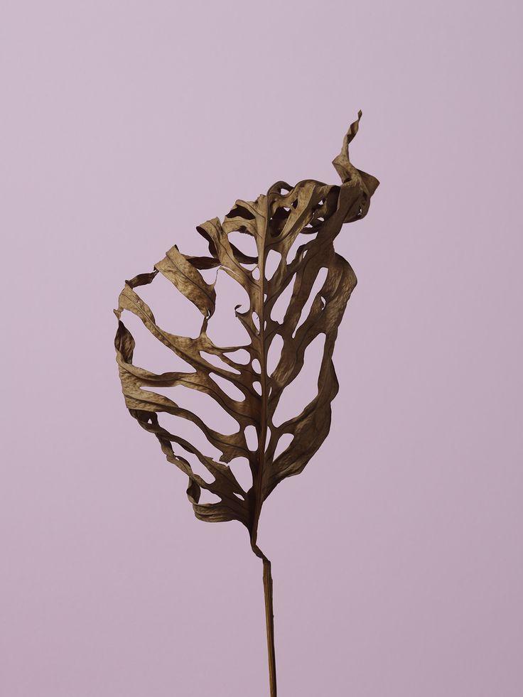 Thomas Brown: Leaf — Thisispaper — What we save, saves us.