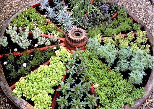 Two Men and a Little Farm: WAGON WHEEL HERB GARDEN        wondering if this would drown during the Louisiana summer rain storms...