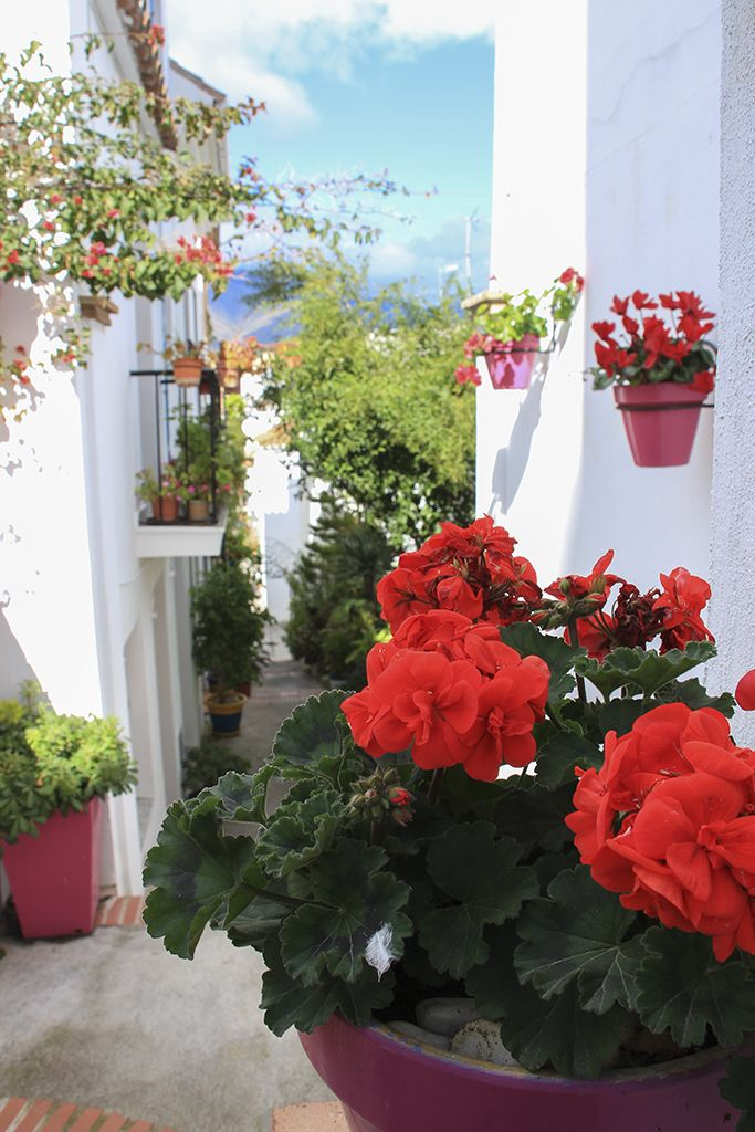 http://theonewhodo.es/andalucia/introduction-to-estepona/