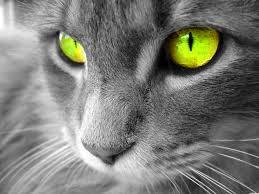 Cat eyes! Green.