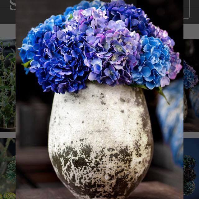 Prachtige zijden blauwe hortensia's!