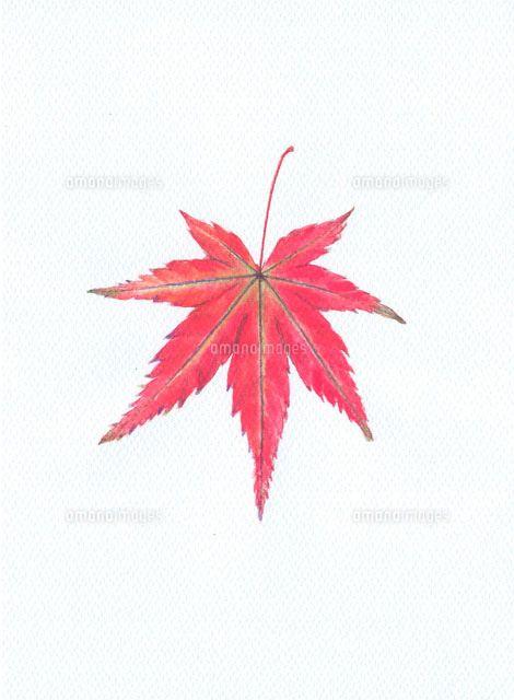 紅葉のイラストのアイデア