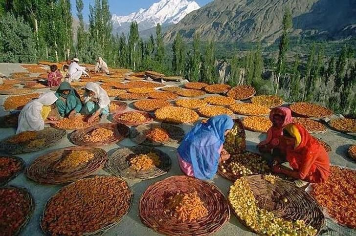 Долину реки Хунза (граница Индии и Пакистана) называют «оазисом молодости». Продолжительность жизни обитателей этой долины — 110-120 лет. Они почти никогда не болеют и выглядят молодо. Значит, существует некий образ жизни, приближающийся к идеальному, когда люди чувствуют себя здоровыми, счастливыми, не стареют, как в других странах, уже к 40-50-летнему возрасту. Любопытно, что жители долины Хунза, ...