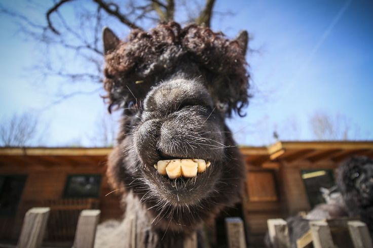We Took Funny Animal Mugshots, Whilst Traveling Around The World