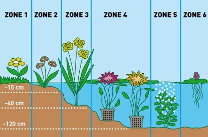 zone beplanting in de vijver-moerings