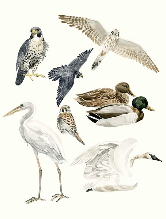 http://melindajosie.com #watercolor #illustration #birds