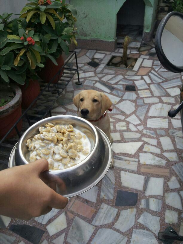 Hey cmon .. give me that ..my food yes yes now .