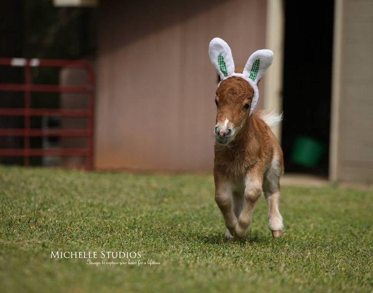 cutest Easter bunny EVER | Mini Horses. (Squuuueeeeee ...