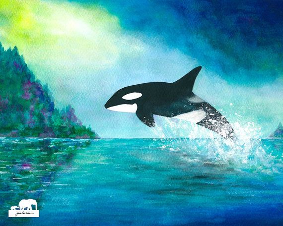 Watercolor print. Young orca killer whale jumping by GinaLeeKim