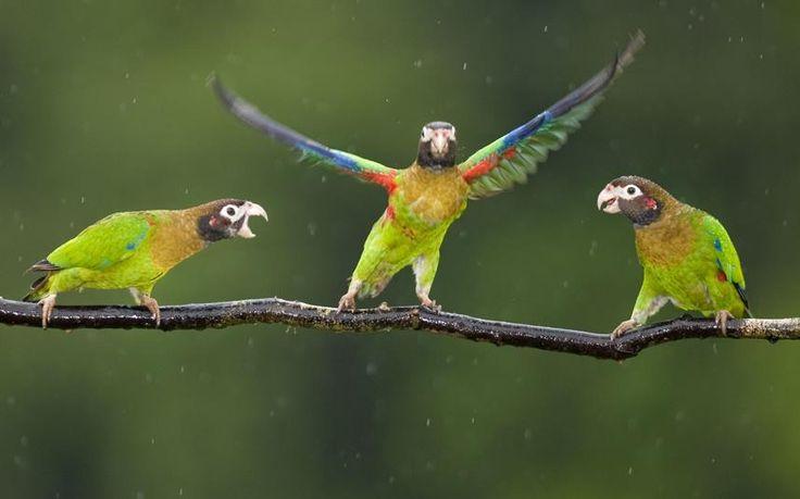 Papuzi dance #taniec #zwierzęta