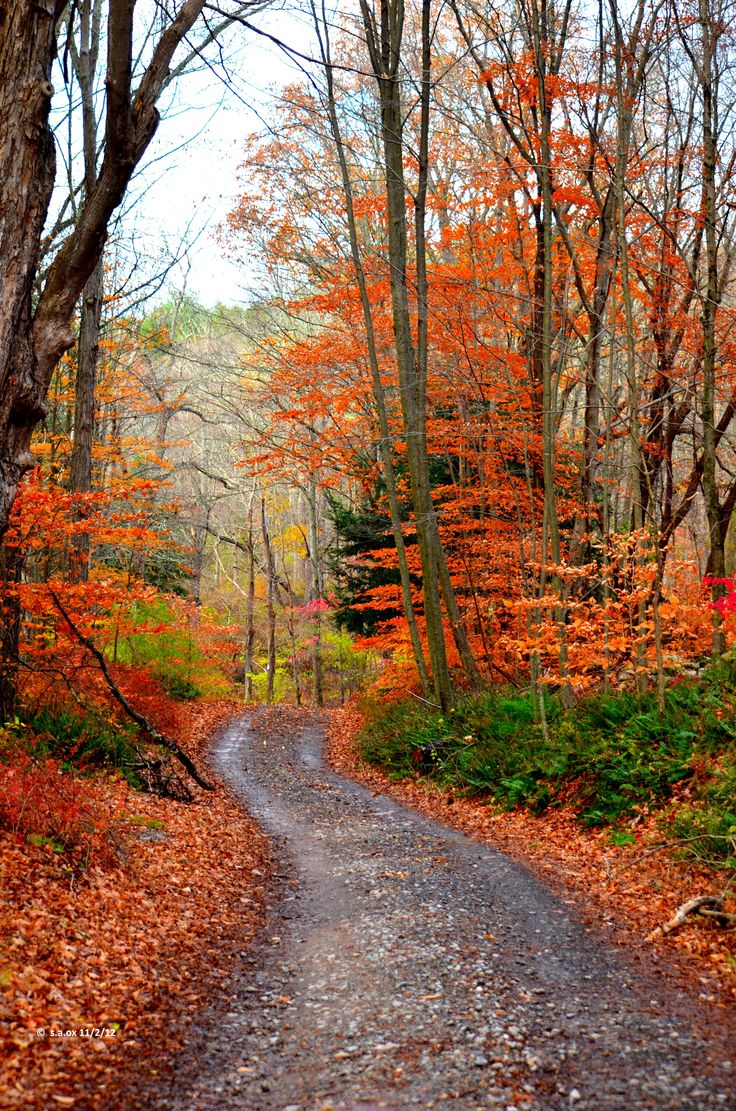 New jersey sussex county layton - Stokes Forest Branchville N J