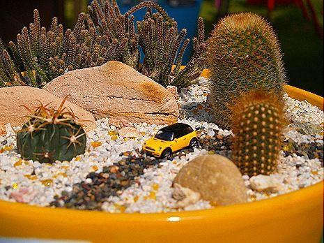 É uma fada do deserto e motorista, ok? Ok.