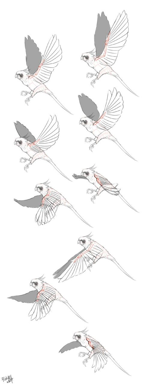 (http://scrapeface.tumblr.com/post/10645203561/amberblade-some-tutorials-of-birds-wings) || Find more artworks at https://www.facebook.com/CharacterDesignReferences  http://www.pinterest.com/characterdesigh