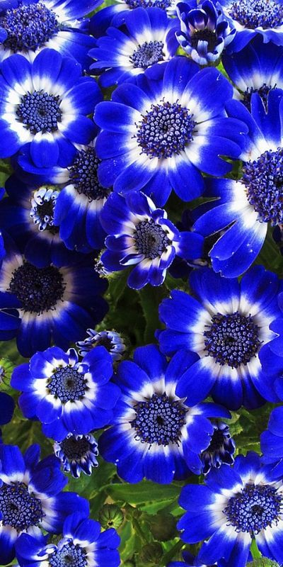 ✯ Blue Flowers pixilate with X's