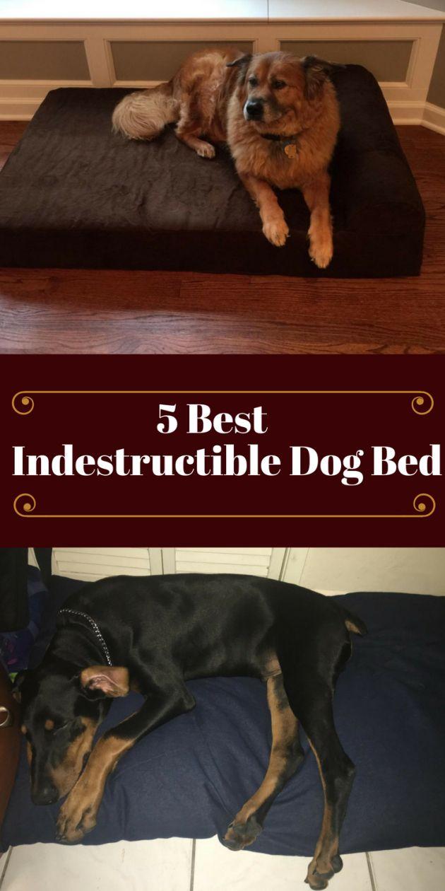 92 best dog bed images on pinterest