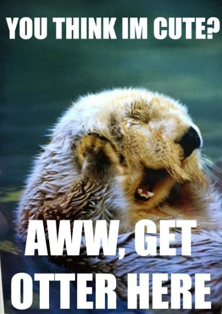 :)Awww, Im Laugh So Hard, Funny, Otters Memes, Adorable, Things, Sea Otters, Giggles, Animal