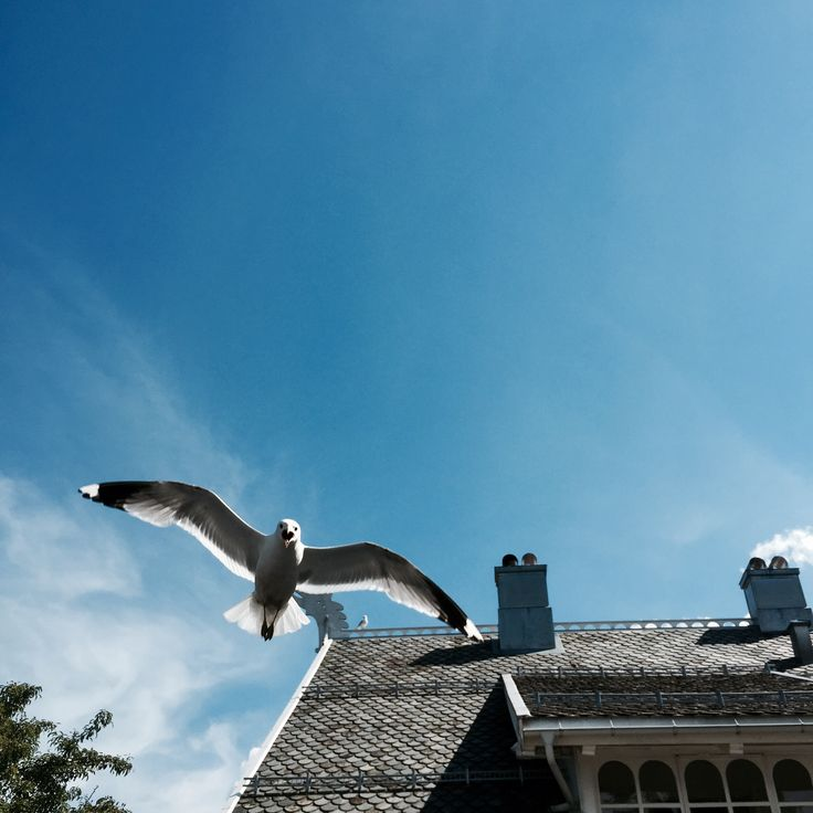 Crazy seaguls on the roof! Good parents though...
