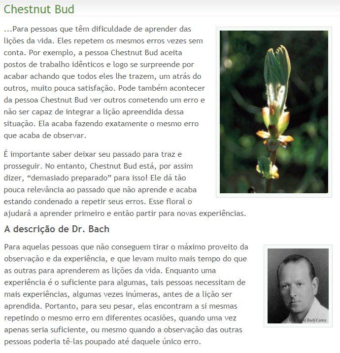 Chestnut Bud - 15.11.17