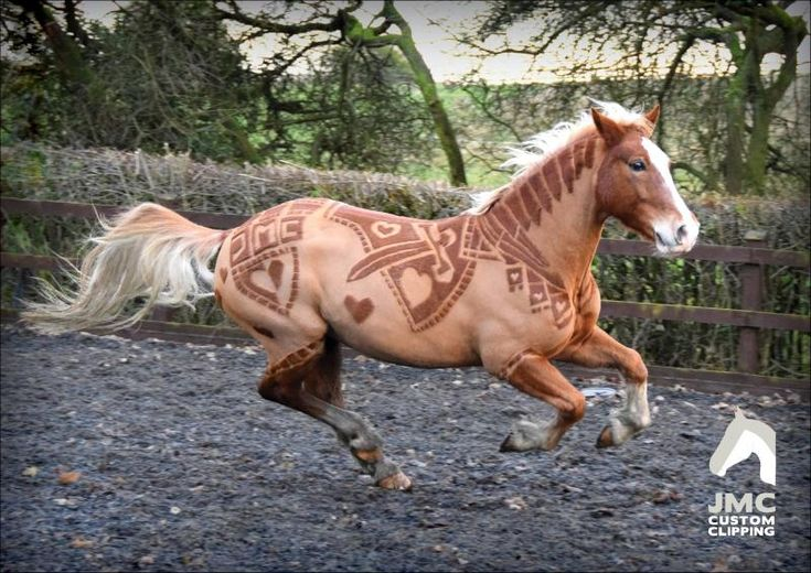 These People Take Beautiful Horses And Do Something Incredible With Their Coats http://www.wimp.com/shaving-patterns-into-horse/