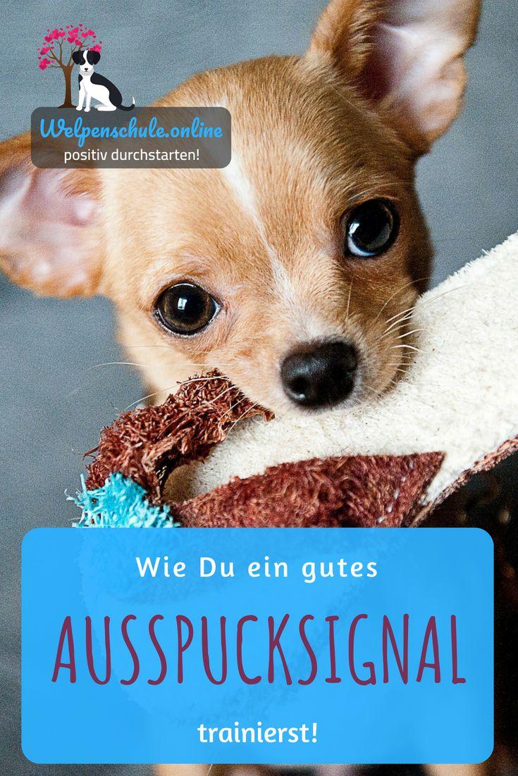 Idee Von Doggyzon Auf Hundetraining Hundchen Training Hunde Erziehen Hundetraining