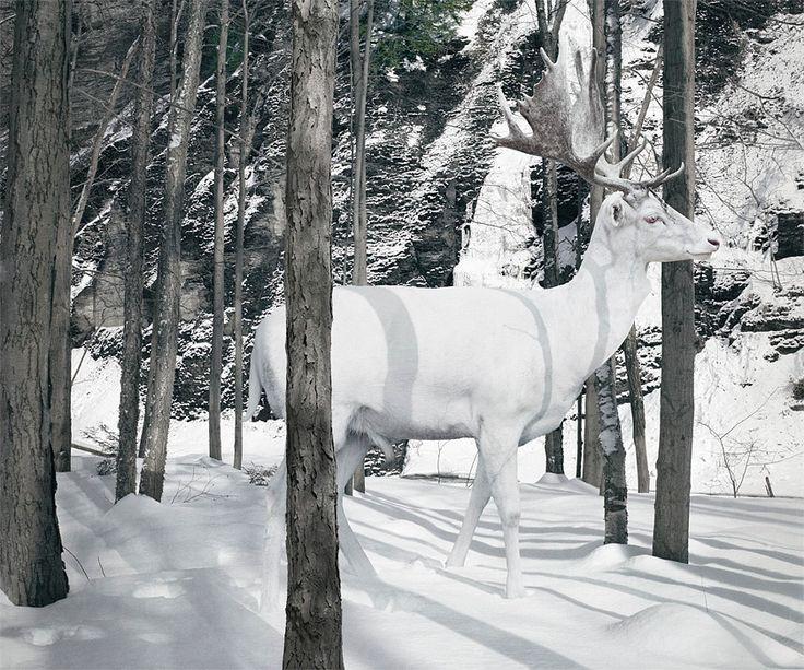 simen johanWinter, Animal Photography, Simenjohan, Snow, King Arthur, White Christmas, Each, White Deer, Simen Johan