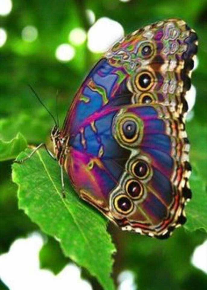 Pin By Rose Berrafati On ผ เส อสวยๆ Beautiful Butterflies Peacock Butterfly Beautiful Bugs