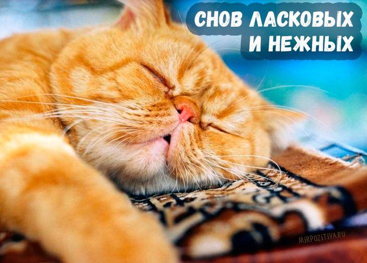 милый спать пора фото открытки соли
