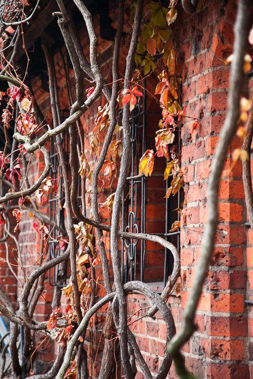 jesień w Malborku
