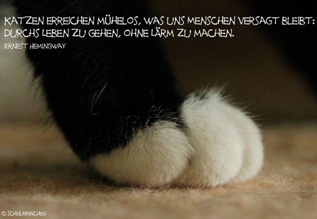 Katzen erreichen mühelos, was uns Menschen versagt bleibt: Durchs Leben zu gehen, ohne Lärm zu machen. Ernest Hemingway