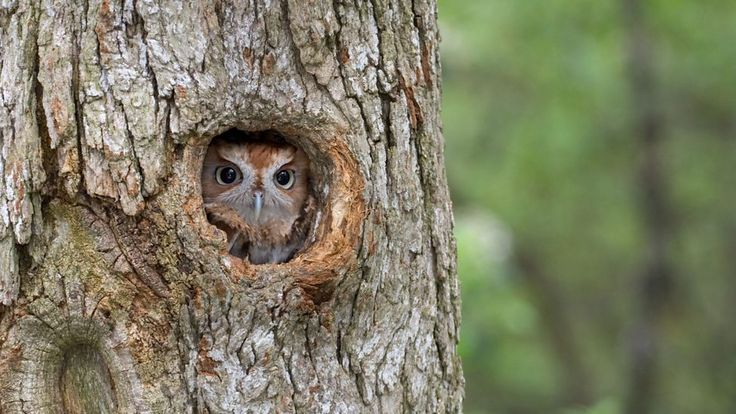 BBC Radio 4 - Radio 4 in Four - Seven things you didn't know about owls