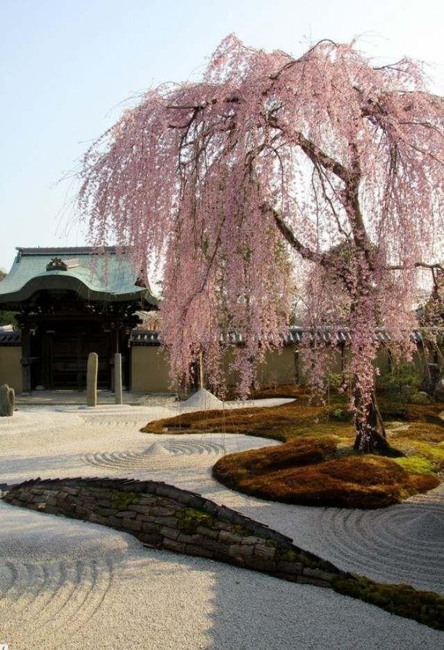 Japan Garten Gestaltung Kirschbaum Kies Stein Anlegen Tipps Gestaltung Japan Gestaltung Japan J Trockengarten Japanischer Garten Gartendesign Ideen