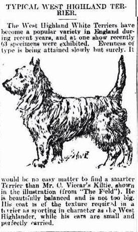 Illustration and description of West Highland Terriers. March 1912. Chronicle newspaper ( Adelaide: S.A. ). National Library of Australia.