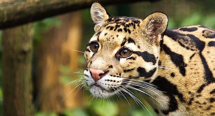 Zoo Dortmund Gutschein 2 Fur 1 Coupon Code Ticket Mit Rabatt Zoo Dortmund Zoo Zoologischer Garten