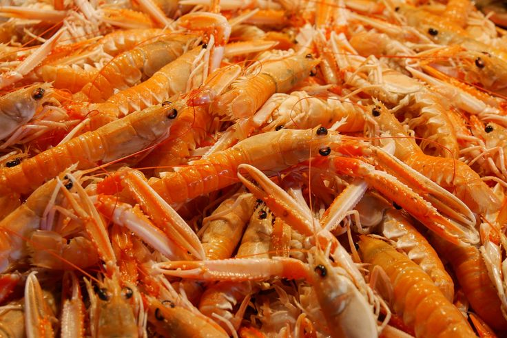 #crustaceans #eat #fish market #food #frisch #gastronomy #healthy #market #nutrition #pliers #probe #seafood #shear #shrimp #tasty #vitamins
