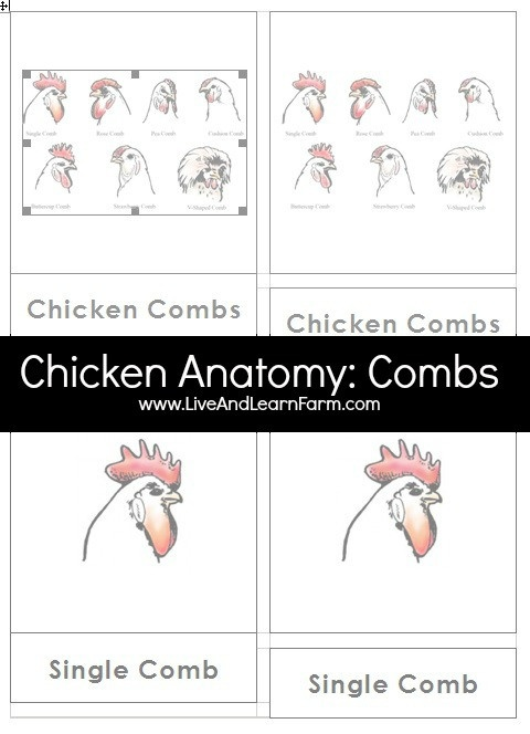 Chicken Anatomy includes several sets of 3 Part Cards.