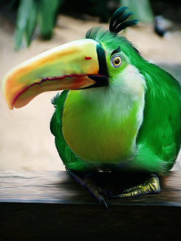 cool birds - Google Search