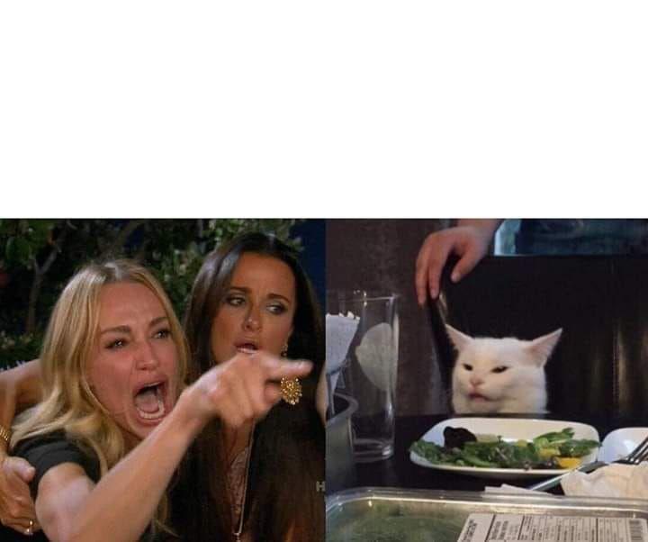 Meme Del Gato En La Mesa Plantilla Con Imagenes Meme Gato