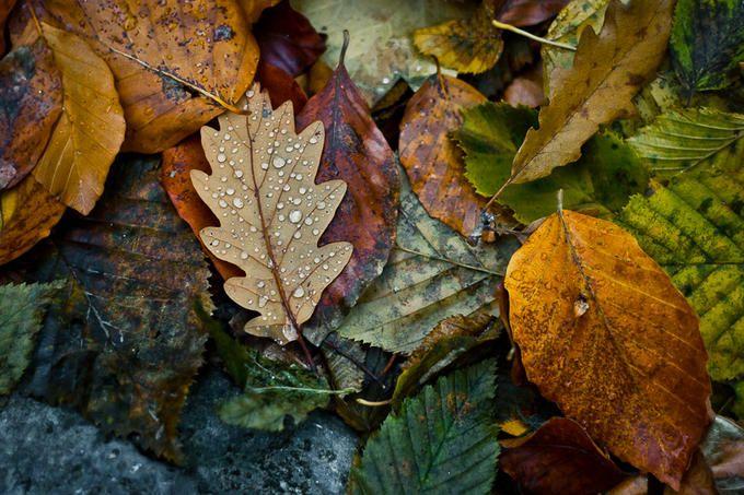 On this rainy autumn day, leaf me on the ground to rest... By: Deyan Uzunov