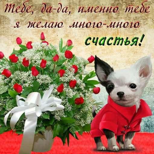 Во от сколько тебе счастья открытка, красивые домашними животными