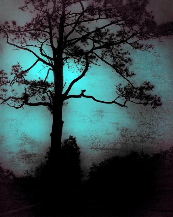 Wall Art Home Decor Fine Art Print Blue Dark Mood Mysterious Tree Lonely Backlit Silhouette Landscape Nature Moody Blue Fine Art Photography Print