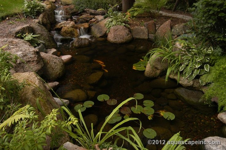 29 best images about pond scenes on pinterest gardens for Koi pond plant ideas
