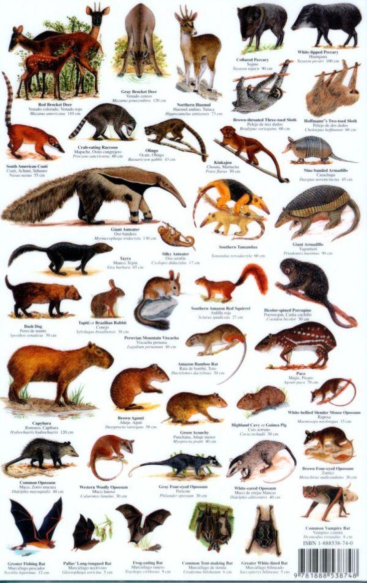 Image Gallery mammal chart