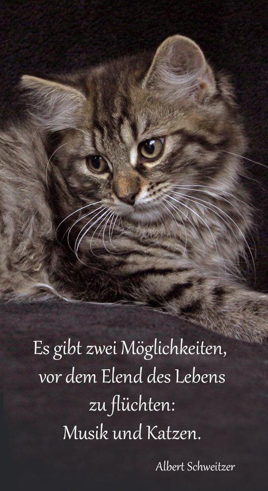 Katzen sind oft die wahren Lebensretter