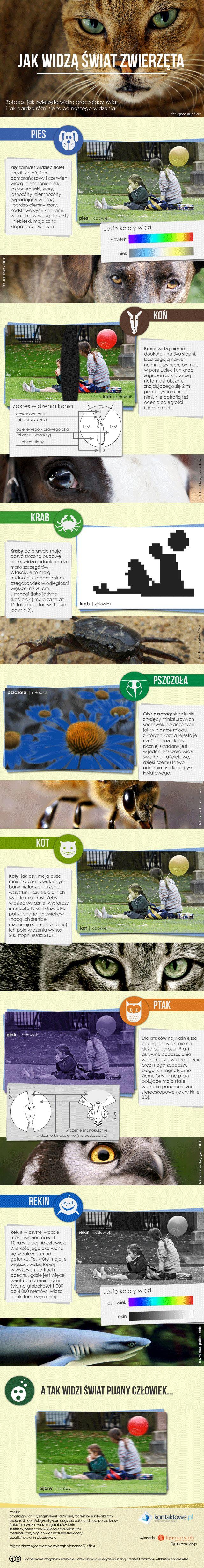 Spójrz na świat oczami zwierząt #infografika #preser #zwierzęta